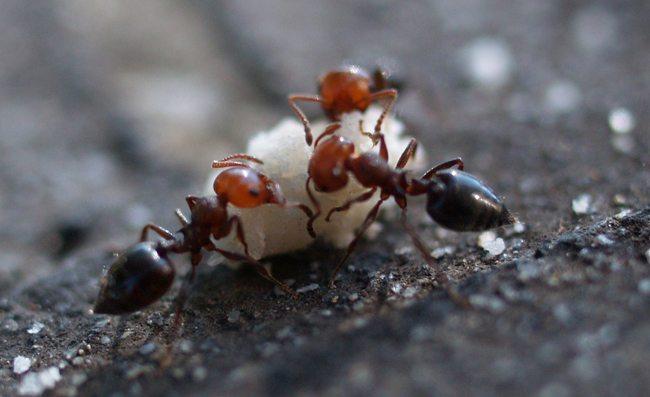 Formiche in casa come prevenirle e allontanarle con - Formiche in cucina ...